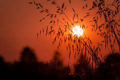 Into the sun (drop_m) Tags: sun canon canon70d 70d 70300mm tree trees warm dusk sunset sunny summer 2017 spring italy silhouette black shadow shadows light lights highlights openair closeup zoom goldenhour hour golden bronze orange red thewhitebuffalo intothesun sky day daylight sunlight f45 canonef70300mmf456isusm ef70300mmf456 ef70300mmf456isusm