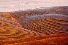 crete senesi italia (giuseppe radaelli) Tags: photo paesaggio landscape natura nature geometrie geometrical