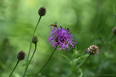 Purple Flower (Bri_J) Tags: tropicalbutterflyhouse northanston southyorkshire uk nikon d7200 yorkshire purple flower