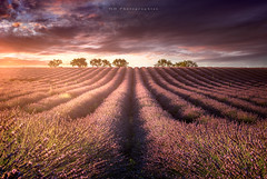 Valensole (Objectif dizi (O.DPhotographies)) Tags: photography paysages photomag megashot valensole sunset nikonphotographer nisifilter nikon fineartphotography france colors landscapes light