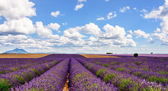 Provence (Wilma van Oorschot) Tags: wilmavanoorschot angelphotography olympusem5 olympusomde5 olympus provence hauteprovence plateaudevalensole france clouds lavender landscape flowers outdoor nature sunny lavande purple
