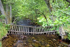 HFF 31 (Harry McGregor) Tags: fencedfriday hff fence forest miltonburn rothiemurches river water highlands scotland harrymcgregor nikon d3300 13 july 2017