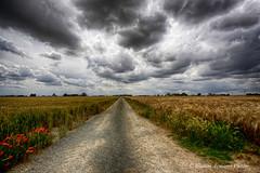La strada del grano (Gianni Armano) Tags: stradina del grano foto san giuliano nuovo alessandria piemonte italia gianni armano photo flickr
