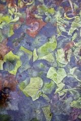 Foule végétale (Gerard Hermand) Tags: 1706138841 château oléron charentemaritime gerardhermand france eos5dmarkii canon eau feuille glass leaf pane verre vitre water