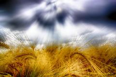 E' la stagione del grano... (Gianni Armano) Tags: è la stagione del grano nuvole giugno 2017 san giuliano nuovo alessandria piemonte italia foto gianni armano photo flickr