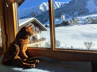 Best view im Gatterhof