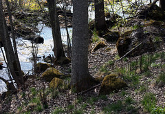 Wild Nature (Linnea from Sweden) Tags: wild nature forest tree stone canon eos 1100d efs 55250mm f456 is