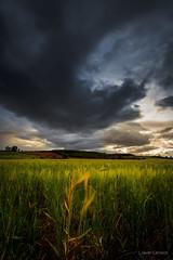 Testigo (AvideCai) Tags: avidecai vertical paisaje cielo nubes sigma1020 sobarriba