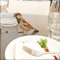 Sharing my Dessert (Margug) Tags: iphone frech nature bird vogel tisch table closeup sperling spatz sparrow