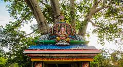 IMG_48614 (Manveer Jarosz) Tags: auroville bharat ganapati ganesha ganpati hindu hindustan india southindia tamilnadu wwoof worldwideopportunitiesonorganicfarms art colorful mandir murti painted rural sculpture temple tree