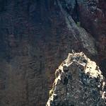 Scandola: Balbuzards au nid-004 thumbnail