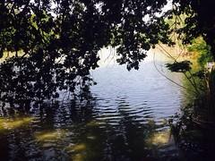 iph502 (gzammarchi) Tags: italia paesaggio natura ravenna marinaromea puntealberete lago fronda ramo riflesso poesia haiku