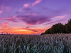 _7041487 (sandygortol) Tags: sonnenuntergang outdoor weizenfeld weizen himmel landschaft langzeitbelichtung sunset sky wheat landscape samsung nx 3000 s1855csb 18 55 mm f35 56 ois iii standardzoom