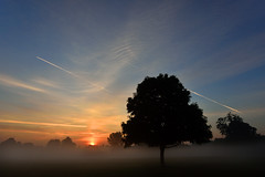 Contrails through the dawn mist  -  (Selected by GETTY IMAGES) (DESPITE STRAIGHT LINES) Tags: nikon d7200 nikond7200 nikkor1024mm nikon1024mm getty gettyimages gettyimagesesp despitestraightlinesatgettyimages paulwilliams paulwilliamsatgettyimages tree trees wood woods woodlands footscraymeadows kent bexley england uk tranquil tranquility serene serenity calm peace peaceful morning am firstlight light sunlight thegoldenhour goldenhour magichour themagichour mist misty morningmist mistysunrise forest silhouette sunrise sun ethereal
