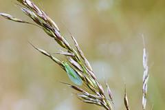 NAW-8219 (Nawred85) Tags: animaux insectes lagarnache localisation lépidoptères nature papillon printemps saison sauvages