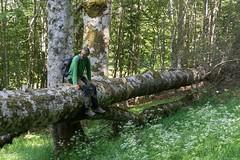 Nella foresta vetusta