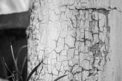 Textura in B&W (ruimc77) Tags: nikon d700 nikkor 105mm f25 ais closeup macro texture textura bw pb bn black white preto branco negro blanco moncromo monochrome
