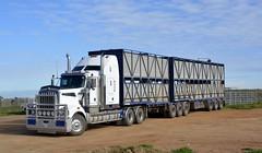 Kenworth T909 (quarterdeck888) Tags: trucks transport semi class8 overtheroad lorry heavyhaulage cartage haulage bigrig jerilderietrucks jerilderietruckphotos nikon d5200 frosty flickr quarterdeck quarterdeckphotos roadtransport highwaytrucks australiantransport australiantrucks aussietrucks heavyvehicle express expressfreight logistics freightmanagement outbacktrucks truckies kenworth t909 t904 stockcrate bdouble bdoublestockcrate livestock livestocktransport australianstocktransport livestocktransportaustralia