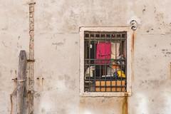 Cat Window (Nick Koehler Photography) Tags: rome venice florence travel travelphotography streetphotography street explore adventure siena photography passion people landscape cityscape city citylife