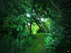 Entrance to Paradise ... (caren (Thanks for 3.5 Mio+ views)) Tags: greenparadise naturepure green light outside natural rural country path relaxation westwales cymru ceredigion leaves trees timetorelax dreamland