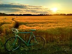 Bianchi (ramóntóth) Tags: bicycle roadbike bianchi celeste sunset