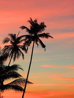 Palm tree shadows against the susnet sky on the beach in Goa, India