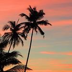 Palm tree shadows against the susnet sky on the beach in Goa, India thumbnail