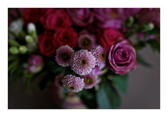 (Guillaume DELEBARRE (off for a while)) Tags: canon 6d ef50f12 flowers fleurs dof bouquet