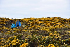 Primari (DoraS.) Tags: colors colorfull colori primari blue blu giallo yellow ireland irlanda giants causway walking camminata freddo flowers fiori human