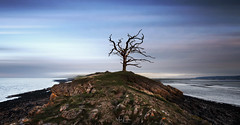 Solitary Tree (Mark Leader) Tags: tree solitary northdevon seascape landscape dreamscape