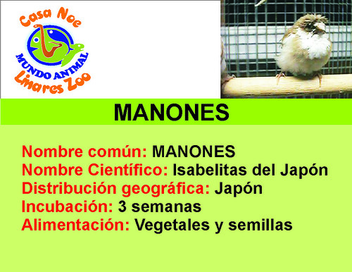 manones