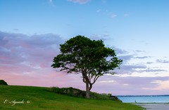 Lone tree (E. Aguedo) Tags: tree sunset sky clouds colors water warwick spring grass green rocky point park ngc new england