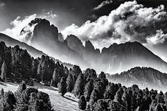 Looking for a Destination... (Ody on the mount) Tags: anlässe berge bäume dolomiten em5 gipfel himmel italien langkofel langkofelgruppe mzuiko6028 omd pflanzen plattkofel südtirol urlaub wanderung wolken bw monochrome sw
