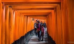 2017 - Japan - Kyoto -  Fushimi Inari - 4 of 8 (Ted's photos - For Me & You) Tags: 2017 cropped japan kyoto nikon nikond750 nikonfx osaka tedmcgrath tedsphotos vignetting kyotojapan torii toriigate fushimiinaritaishashrine kyotofushimiinaritaishashrine fushimiinaritaishashrinekyoto people peopleandpaths orange vermilliuon pathway path
