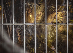 HUMAN EXTINCTION (oroyplata.) Tags: extinction fine apocalipsy desaster nuclear dinosaurios jurásico concept lighting coloors film pelicola jungla jungle vegetacion luces help ayuda forest aventuramadventure hand mano surreal irreal shadow fark fear creative edition master editor explorer