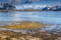 The seaweeds (Sizun Eye) Tags: lofoten spring mai 2017 sun clouds sea norway nordland seaweeds mountains snow weather sunny sizuneye tamron2470mmf28 nikond750 leefilters nisifilters landscape coast seascape