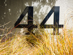 44 (Steve Taylor (Photography)) Tags: 44 contrast black brown yellow concrete newzealand nz southisland canterbury christchurch cbd city grass seed shadow sunny sunshine number