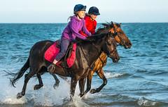 Evening Gallop (jeffcoleman372) Tags: sea beach horses gallop fun horse ride