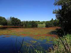 A natureza é a mais viva arte da vida. (Ⱥndreia) Tags: sonydschx200v portugal póvoadevarzim parquedacidade citypark 2017 lago lake natureza nature água water
