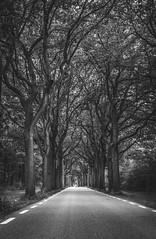 unknown (Timo Nennen) Tags: weg street strasse way forward niederlande holland netherlands monochrome schwarzweiss bäume trees tree äste weite tunnel drenthe assen