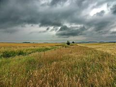 Landschaft (Wunderlich, Olga) Tags: landschaft rügen insel deu gras bäume feld getreidefeld getreide himmell wolken natur