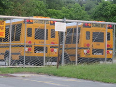 East End Lines #1186 and #1185 (ThoseGuys119) Tags: eastendbuslinesllc schoolbus medfordny orangecountytransitllc maybrookny bluebird
