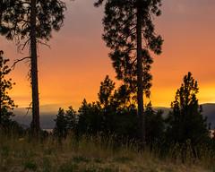Smoky Sunset (Brenda Gooder Photography) Tags: smokysunset sunsetsandsunrise okanagan valley ponderosa pine trees kelowna