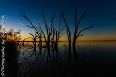 IMG_5429 (biglaptogs) Tags: barmera lakebonney riverland sa states sunsetsunrise