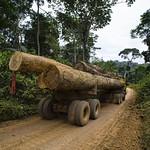 Wood truck thumbnail