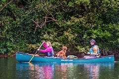 Throw back Thursday to when we paddled the whole Blackwater River from source to sea. A total of 165 km over 4 days of paddling and camping! 📷 @michaelhoward7046 • • • • • #campingwithdogs #hikingwithdogs #dogsonadventures #dogsthathike #adventured (watson_the_adventure_dog) Tags: throw back thursday when we paddled whole blackwater river from source sea a total 165 km over 4 days paddling camping 📷 michaelhoward7046 • campingwithdogs hikingwithdogs dogsonadventures dogsthathike adventuredog thestatelyhound houndandlife backcountrypaws doglove hikingdogsofinstagram excellentdogs adventureswithdogs topdogphoto heelergram hikingdog animaladdicts traildog ireland bestwoof campingcollective visualsgang wanderireland instaireland inspireland irishpassion irelandgram campingculture stayandwander