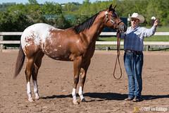 JBC_8131.jpg (Jim Babbage) Tags: krahc annualshow appaloosa horses