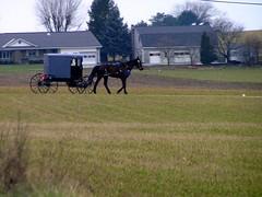 5-01 Amish Buggy (megatti) Tags: amish buggy horse lancaster pa pennsylvania