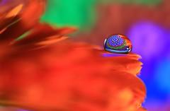Feelin' groovy (alideniese) Tags: macromondays dripsdropsandsplashes macro closeup bokeh water waterdrop droplet refraction colour colourful pattern flower petal