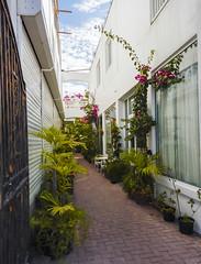 2017-04-23_09-02-22 Garden Passage (canavart) Tags: sxm stmaarten stmartin sintmaarten philipsburg fwi pottedplants tropical narrow passage lane atrium